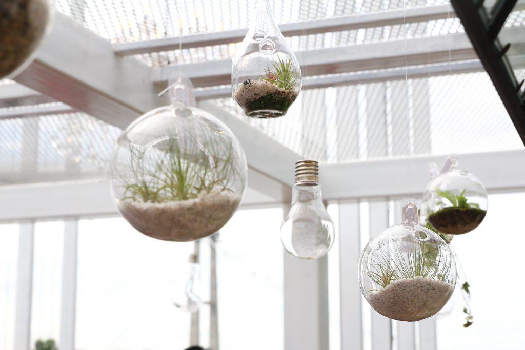 indoor hanging plants